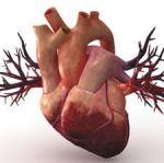 regenerative medicine heart