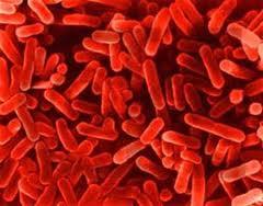 prebiotics, probitotics