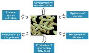 prebiotics, probitoics